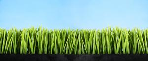 Lawn Seeding Atlanta